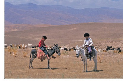 Riders on donkeys in Central Asia